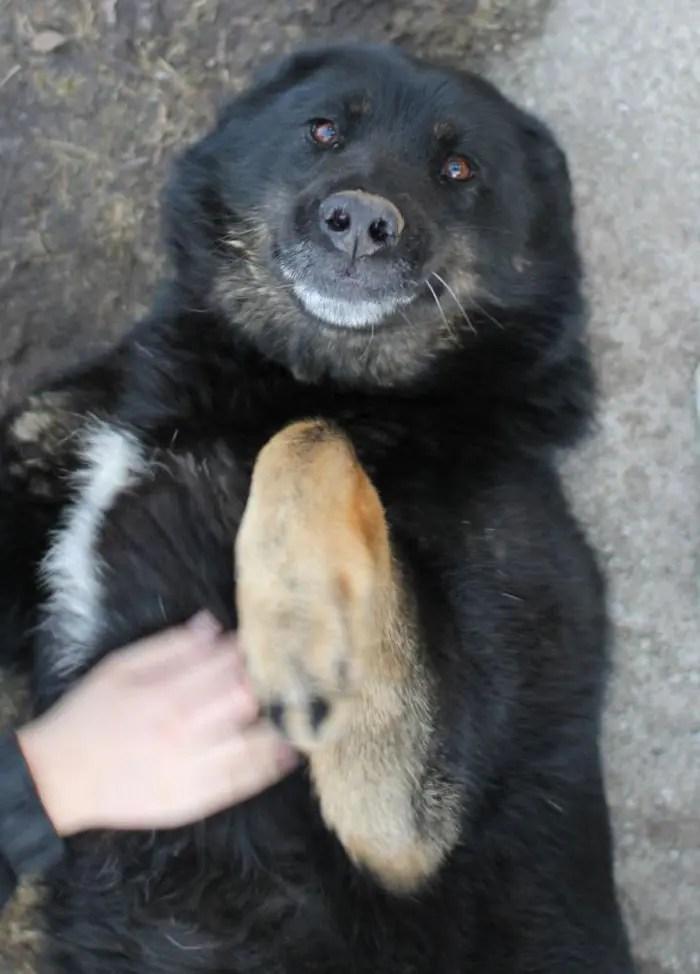 sonrisas de perros 14