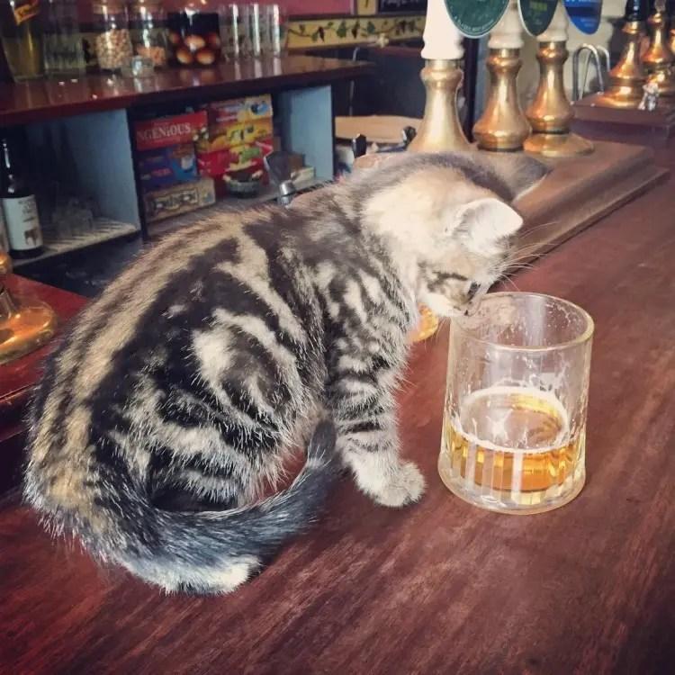 bar de gatos 1