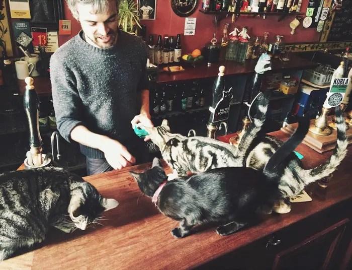 bar de gatos 2