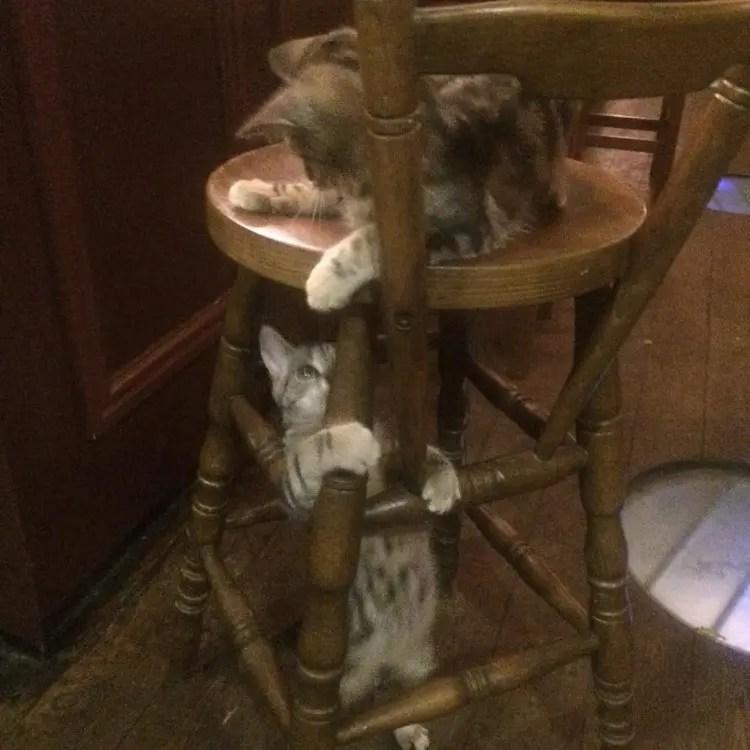 bar de gatos 3