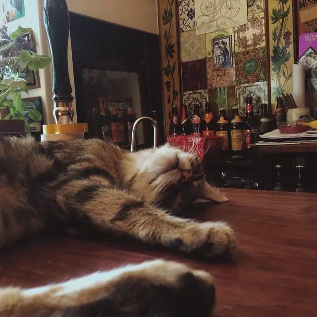 bar de gatos 6
