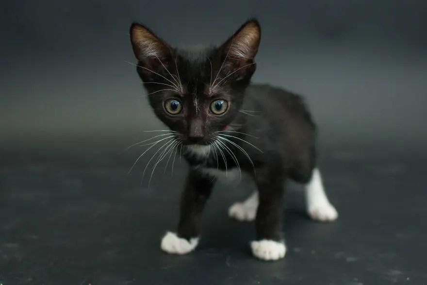 gatos negros adopcion 8