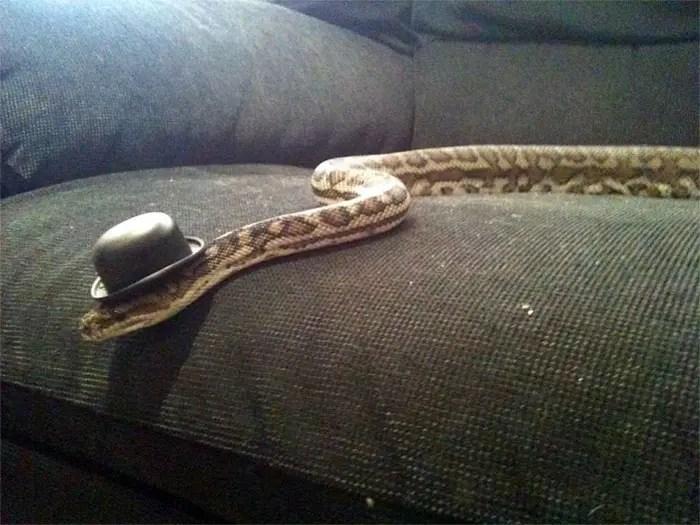 sombreros serpientes 17