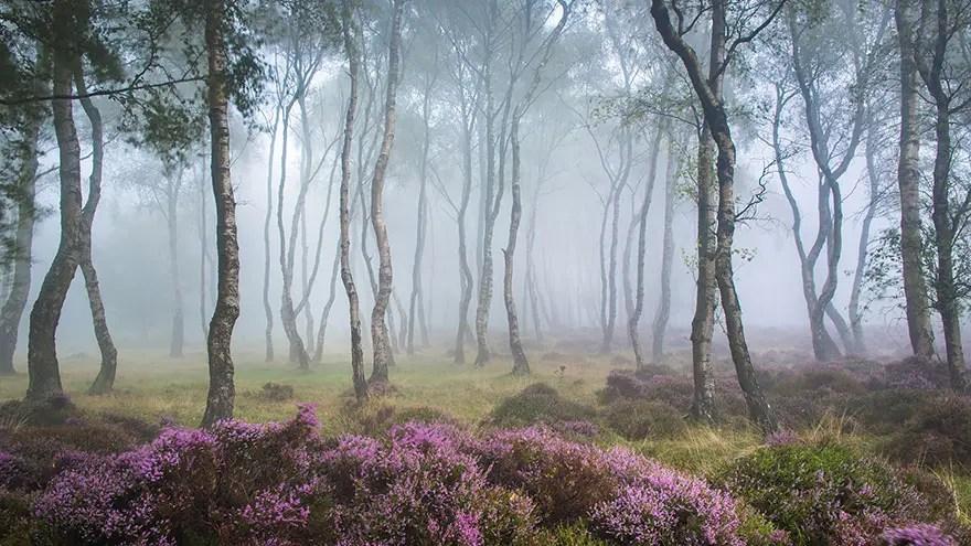 bellos bosques 11