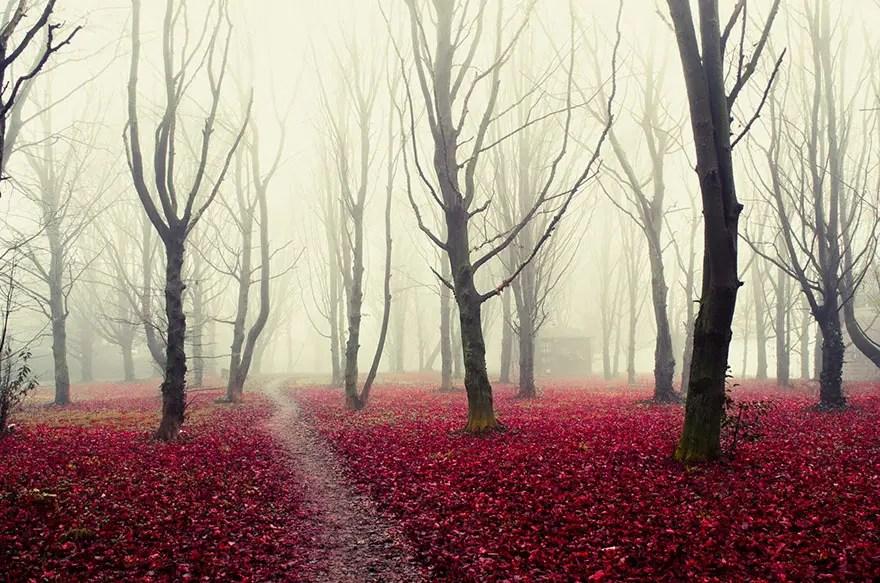 bellos bosques 15