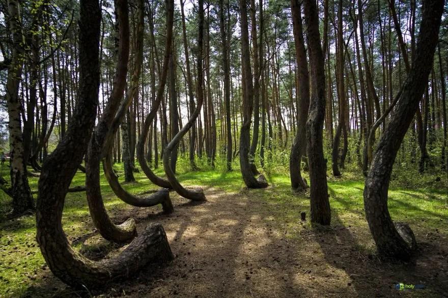 bellos bosques 17