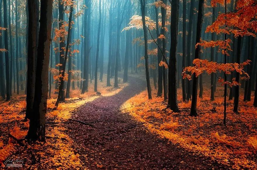 bellos bosques 5