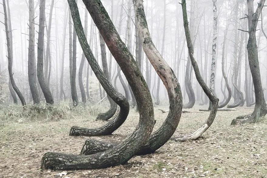 bosque misterioso 2