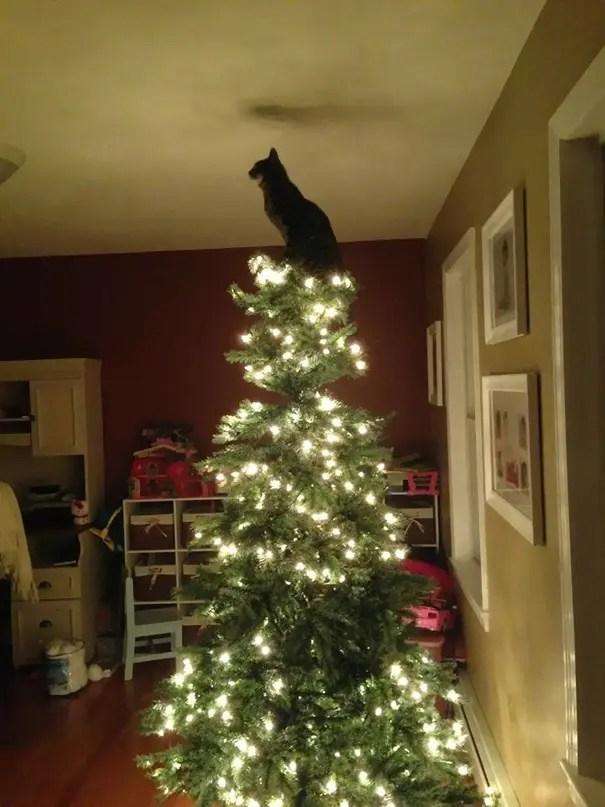 gatos-decorando-arbol-de-navidad2