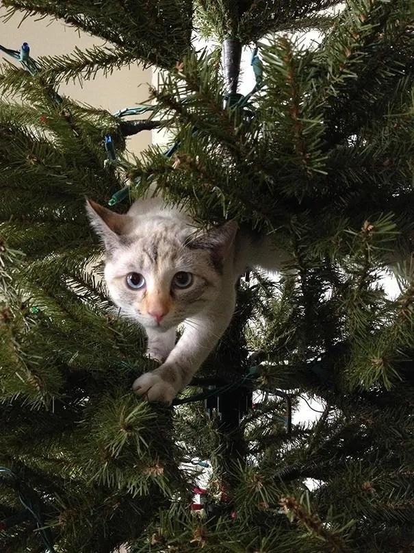 gatos-decorando-arbol-de-navidad9
