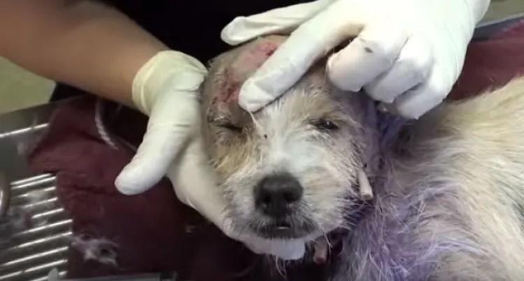 violet-perrita-rescatada9