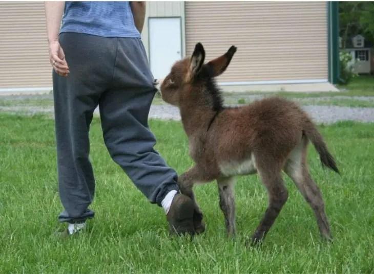 13-razones-para-tener-un-burro-bebe7