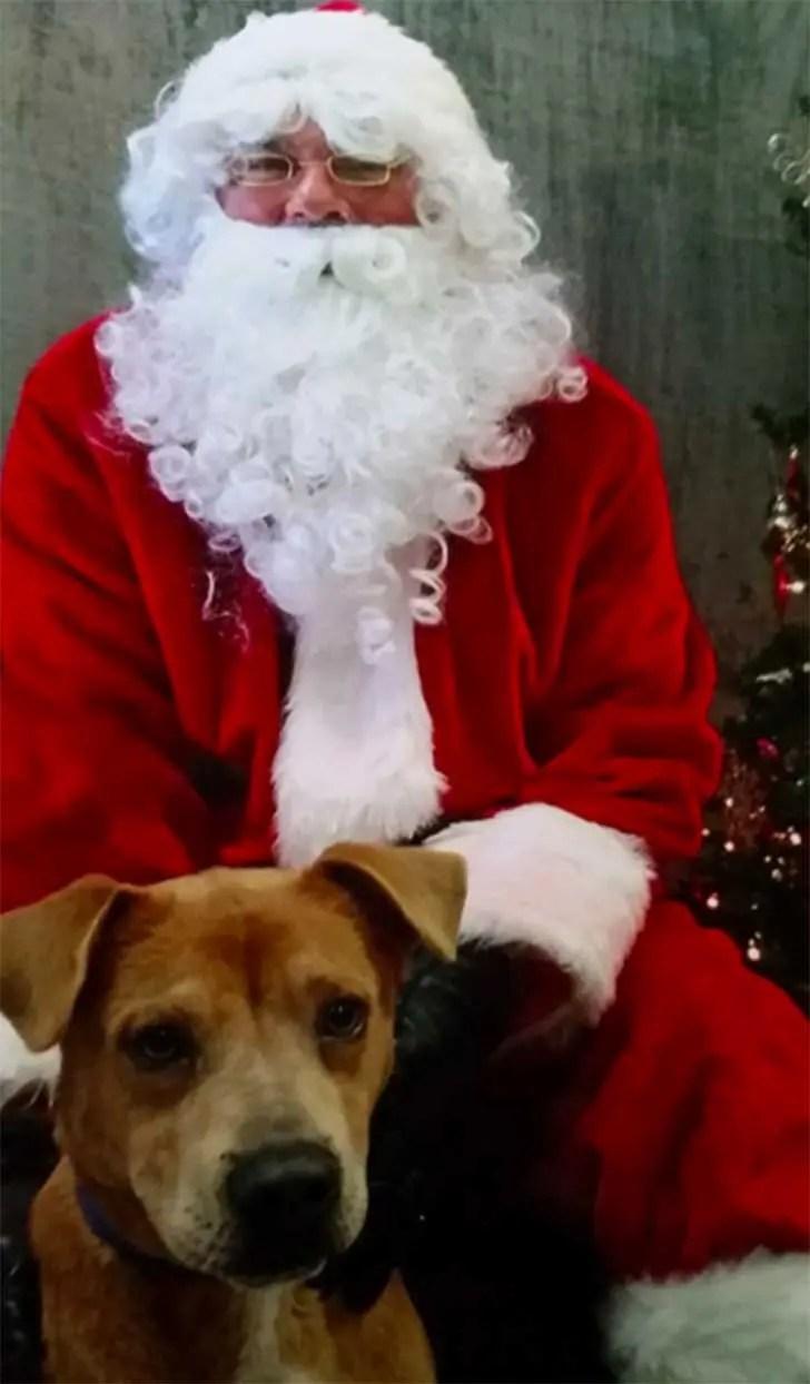 familia-perros-navidad1