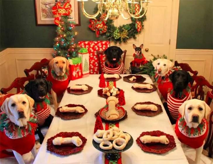 familia-perros-navidad8