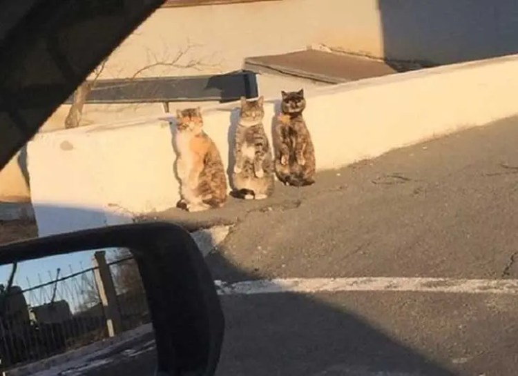 gatos-sorprendidos-sospechosa-actitud3