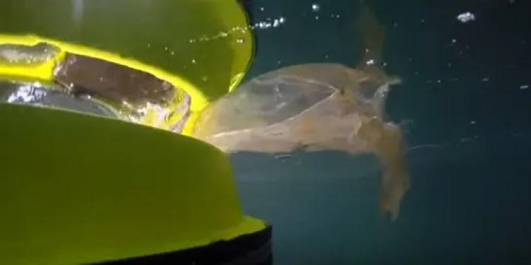 papelera-flotante-para-limpiar-el-mar12