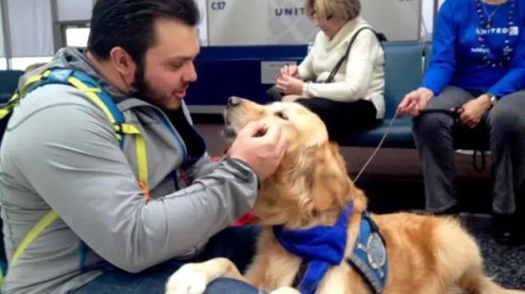 utilizan-perros-para-calmar-pasajeros-nerviosos1