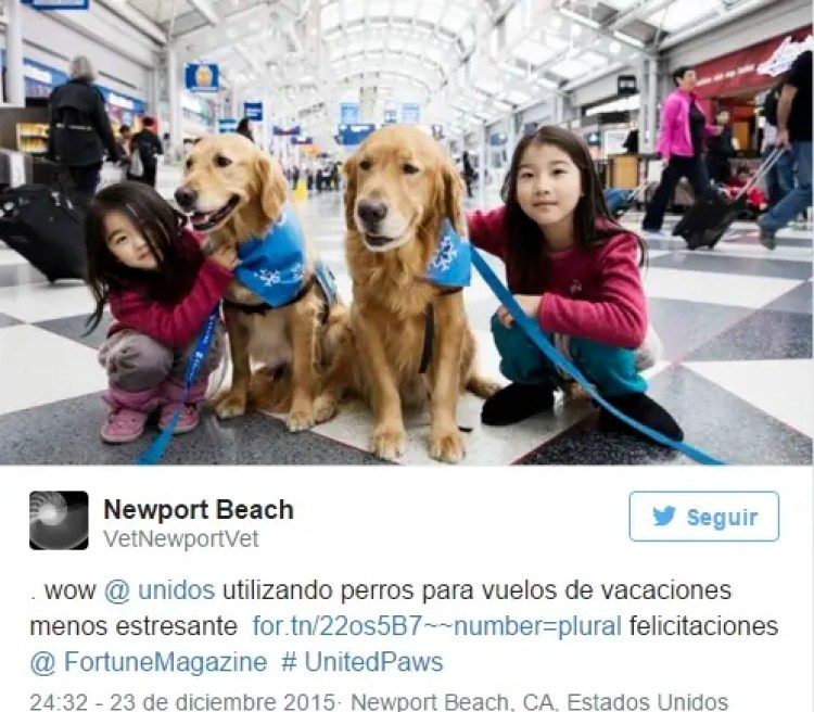 utilizan-perros-para-calmar-pasajeros-nerviosos13