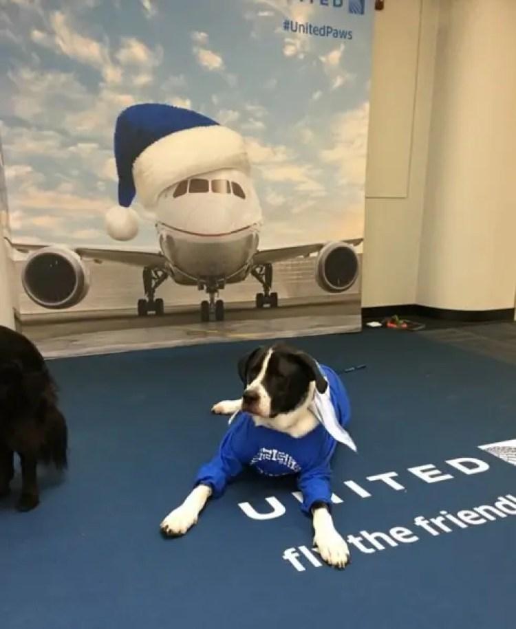 utilizan-perros-para-calmar-pasajeros-nerviosos6