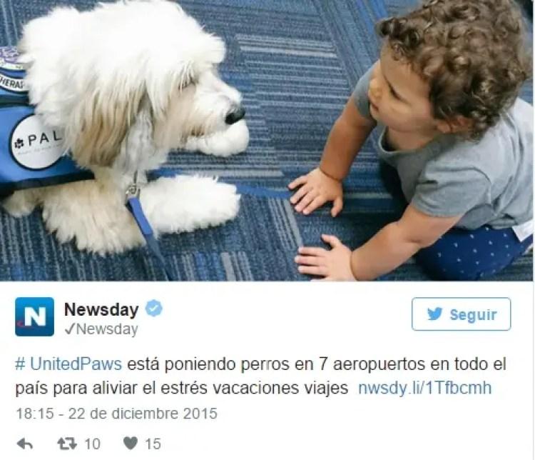 utilizan-perros-para-calmar-pasajeros-nerviosos7