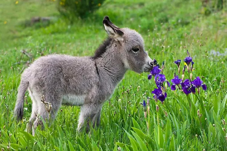animales-oliendo-flores-10