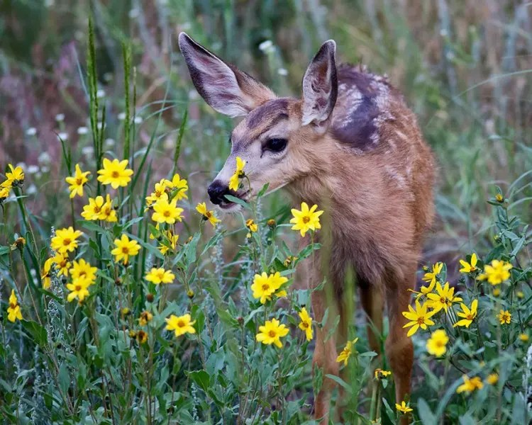 animales-oliendo-flores-24