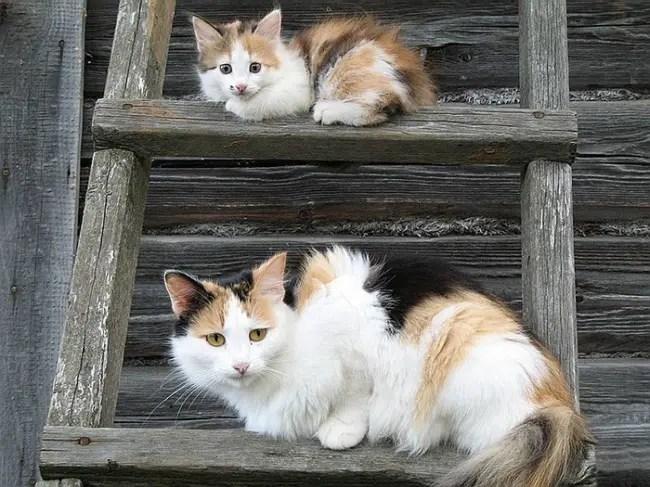 gatos y miniaturas 13