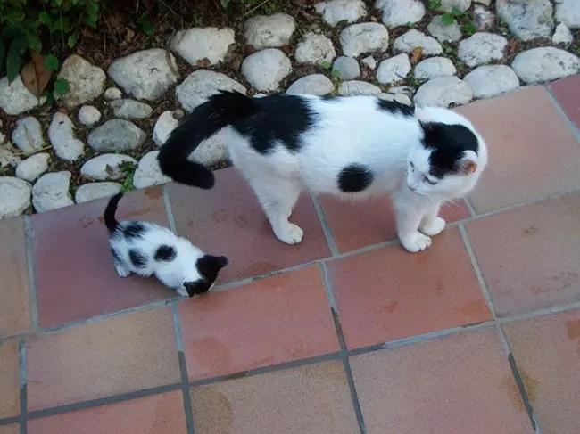 gatos y miniaturas 14