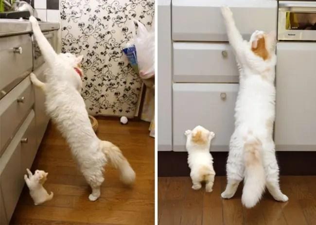 gatos y miniaturas 5