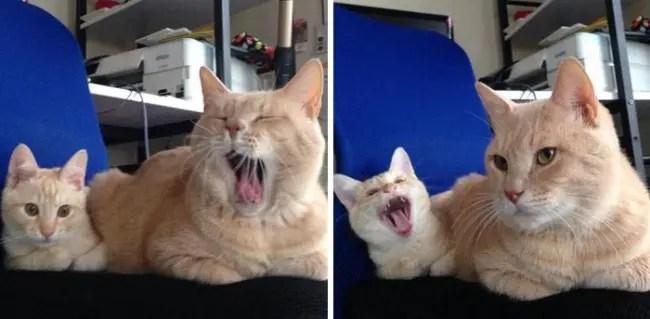 gatos y miniaturas 8