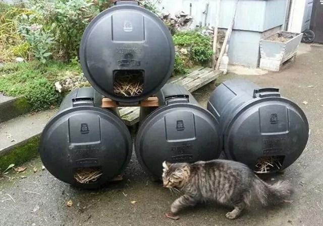 refugio gato silvestre 10