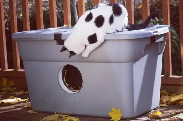 refugio gato silvestre 6