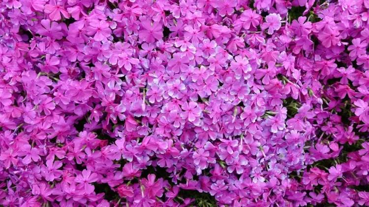 romantico jardin de flores 3