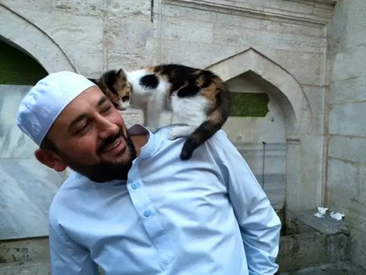 gatos bienvenidos en mezquita 1