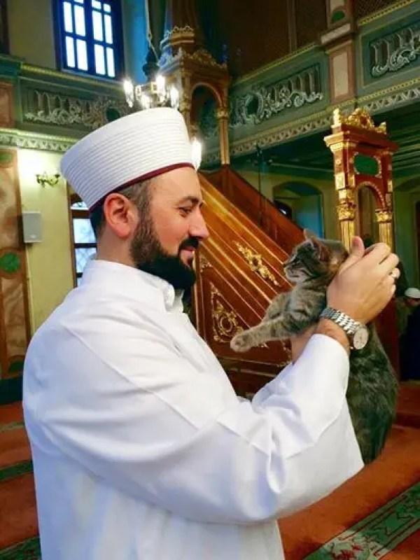 gatos bienvenidos en mezquita 4