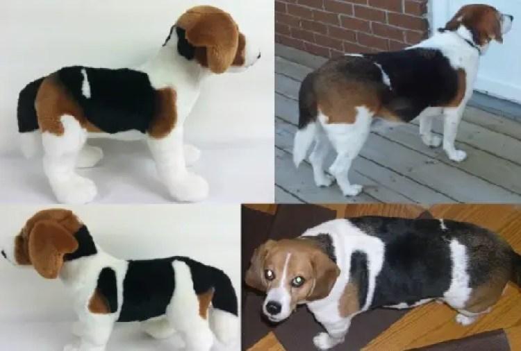 perritos-clonados-en-peluche-23
