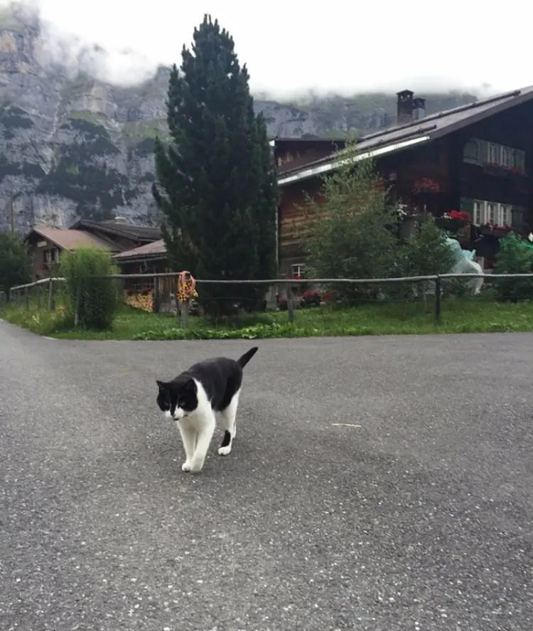 gato-guia-hombre-suiza-03