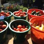 basekts of produce
