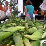 corn close up 013