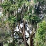 Kanapaha Botanical Gardens : Gainesville, Florida