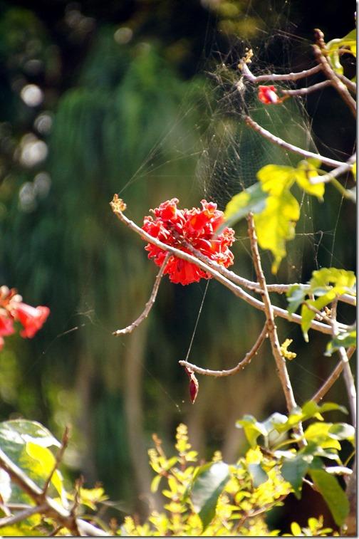 Fairchild Tropical Botanical Gardens - Miami (12)