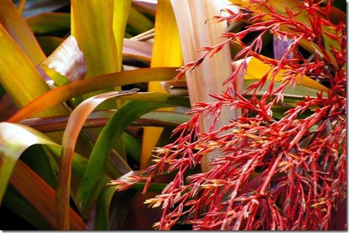 Fairchild Tropical Botanical Gardens - Miami (32)