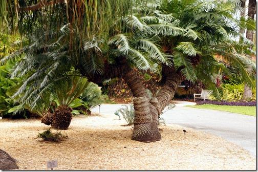 Fairchild Tropical Botanical Gardens - Miami (41)