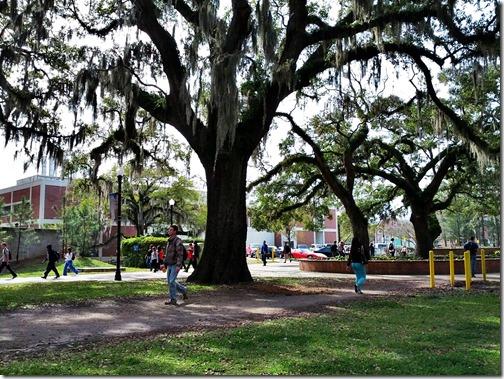 Florida State University Campus (19)