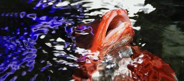 akvariet©finn-robert-jensen