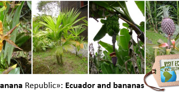 ecuador-top-banana-exporter-worldwide