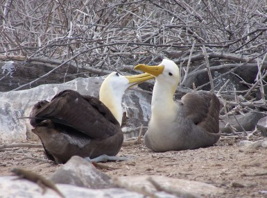 a-close-encounter-with-five-endemic-and-native-species-of-the-galapagos-islands