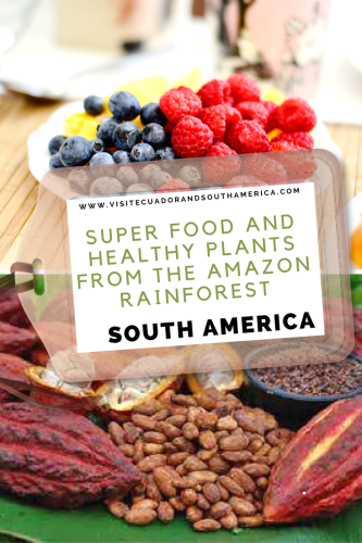 super-food-and-healthy-plants-from-the-amazon-rainforest