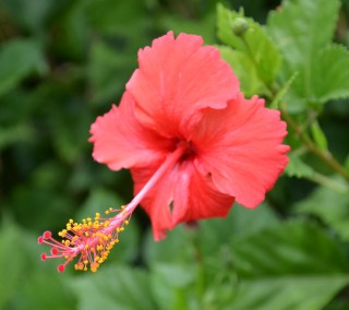 Blütenpracht auf Hawaii