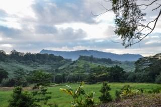 Grüne Landschaft Hawaiis